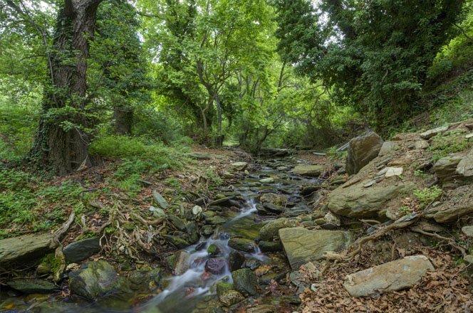 flora en fauna op andros, griekenland