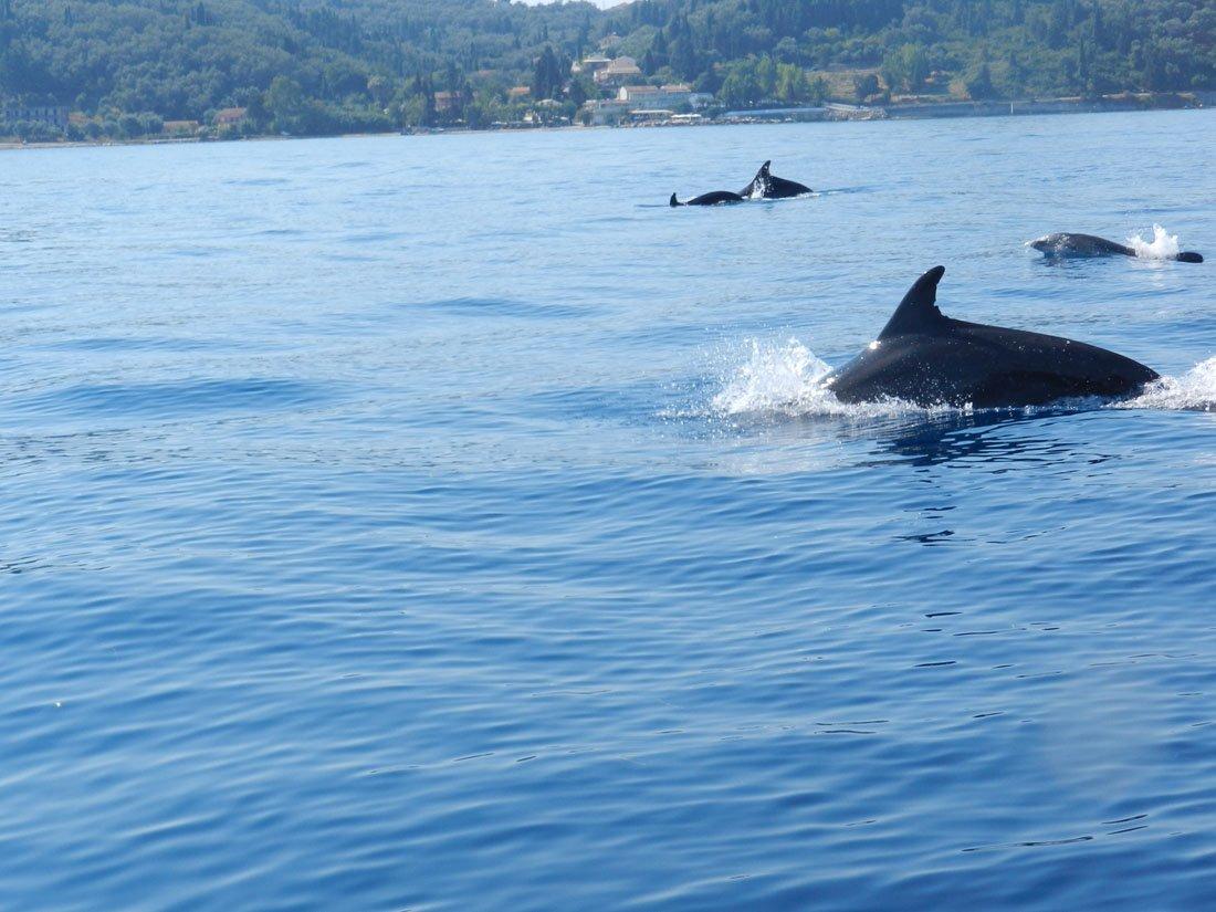 foto van gasten vakantie corfu (36).jpg