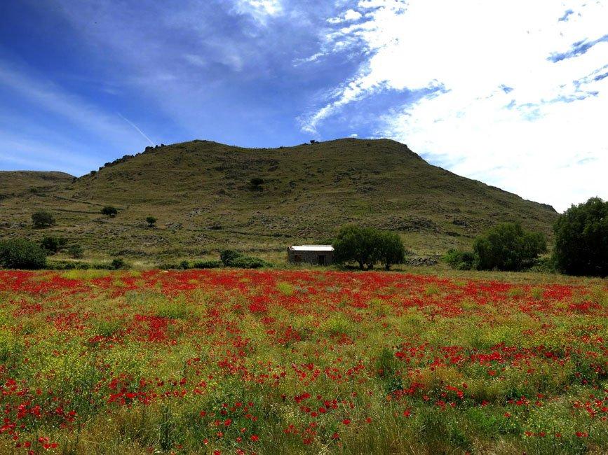 Vakantie naar Samos de beste tips   Gek op Griekenland
