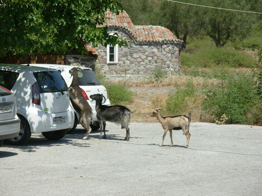 Foto's van gasten vakantie Lesbos