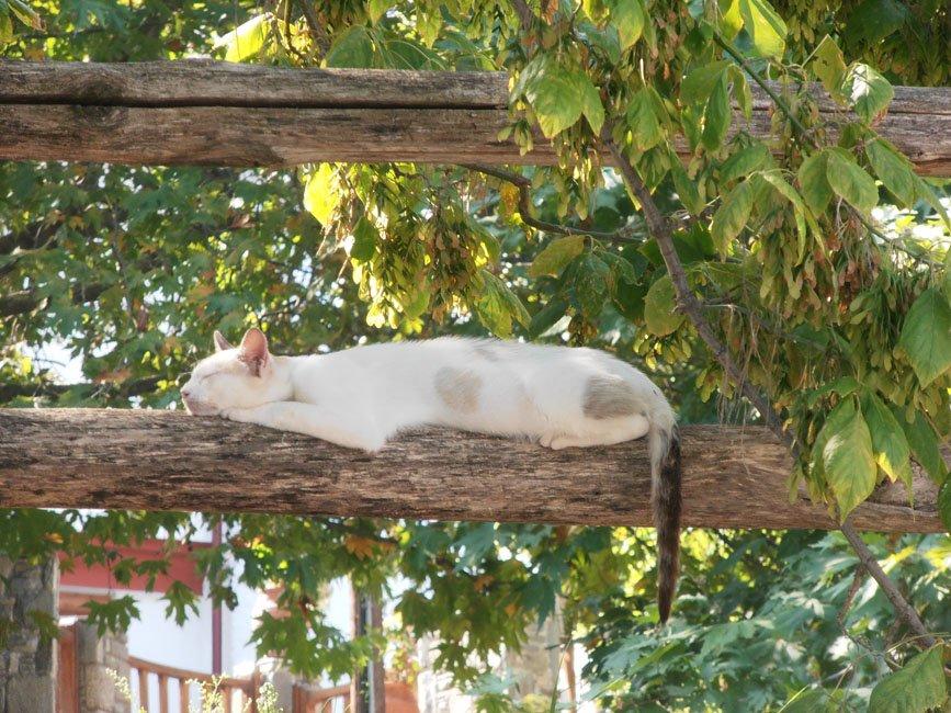Foto's van gasten vakantie Thassos