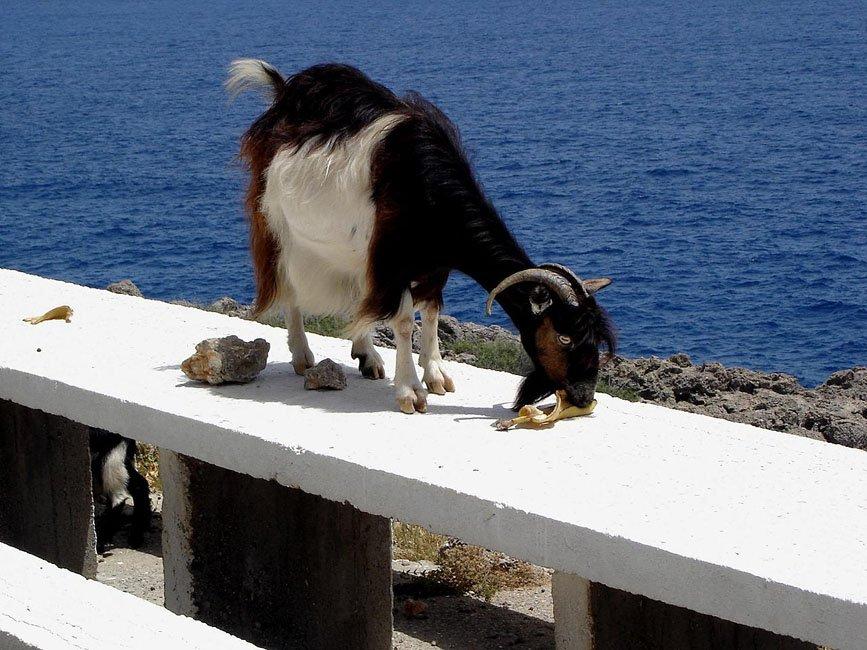 Foto's van gasten vakantie Zuid-Kreta