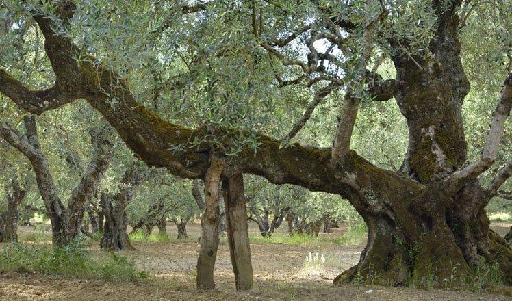 het dorp vasilikos op zakynthos